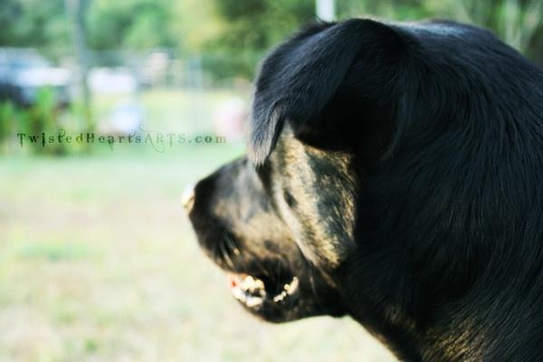 A Boy\'s Best Friend. by TwistedHearts