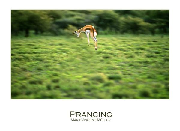 Prancing by MarkVMueller