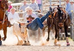 Steer Wrestling II
