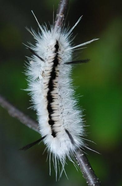 Fuzzy by Mychael