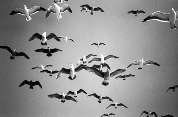 Grief 3. by Aldo Panzieri