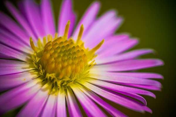 flower macro by vagabond