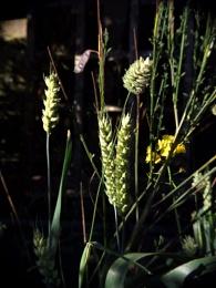 Corny pictures.
