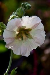 A Flower!!!!