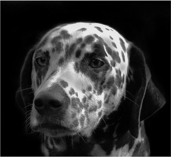 Mono Spots by ringyneck