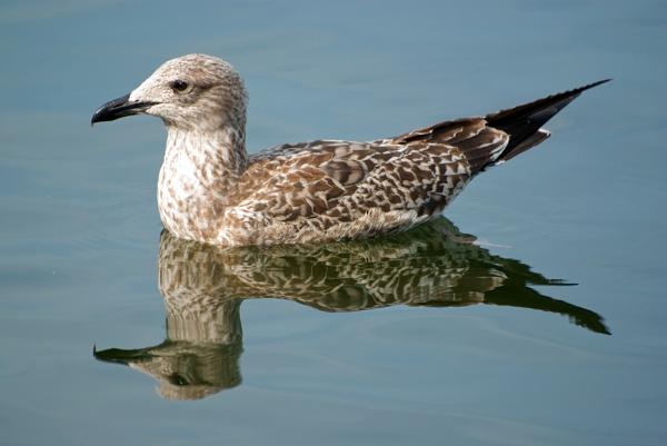Reflecting birds by franken
