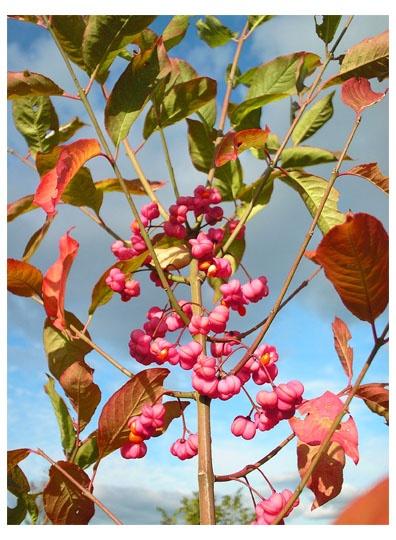 Autumn Bursts by Paul1972
