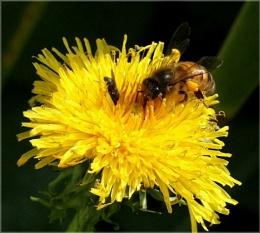 Bee-ing friendly
