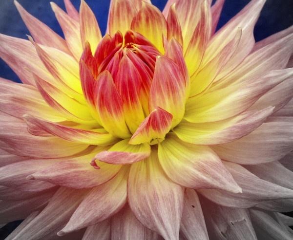 Focal Flower