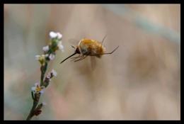 Bee-Fly11,12,13