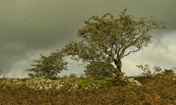 Storm brewing Dartmoor by DianeFifield