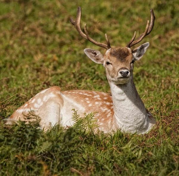 Oh Deer by ronan1