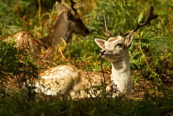 Sunshine Deer by ronan1