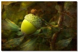 The acorn.