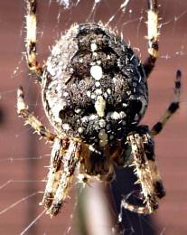 Spider Detail.
