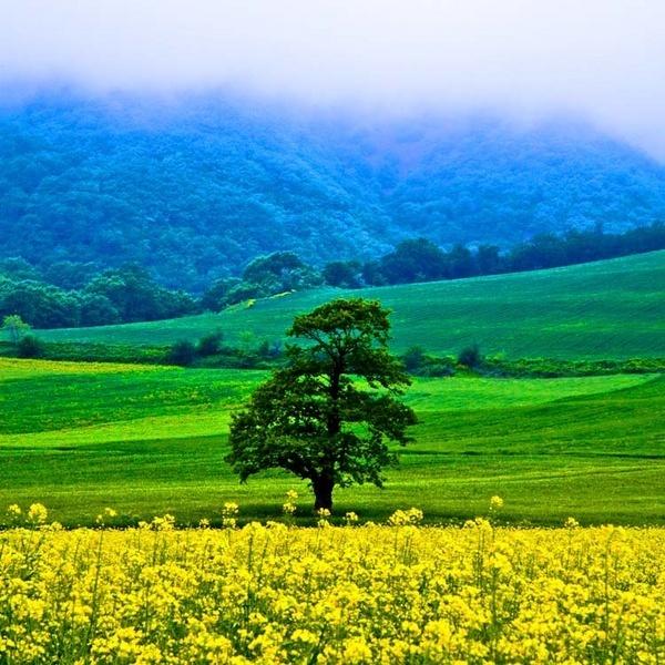Tree by aminnadi