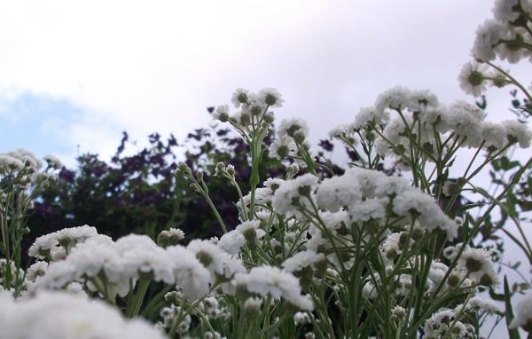 flower power by Tash_hares