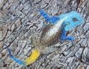 cool blue lizard