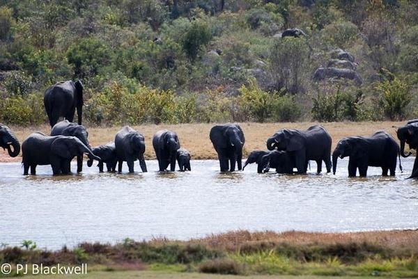 Ivory Lodge elephants by peggyb