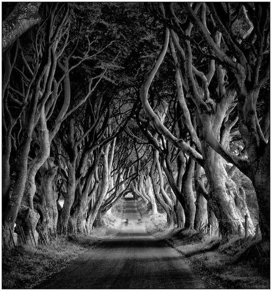 The Dark Hedges by KWBarbs
