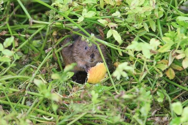 An apple a day..... by cheddar-caveman