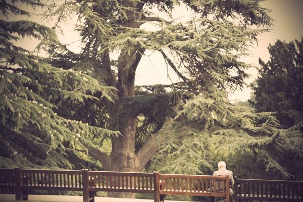 Park Bench by ClareDavid