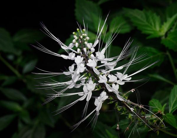 Flowers by bigredtim
