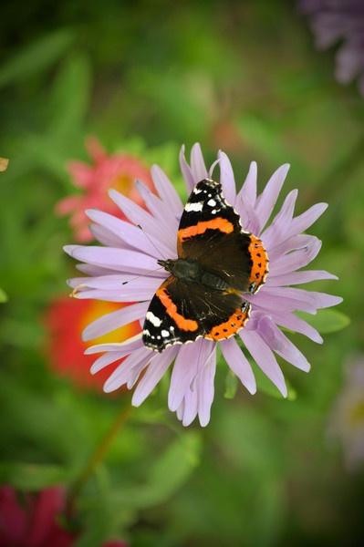 Flutterby by NaomiThompson