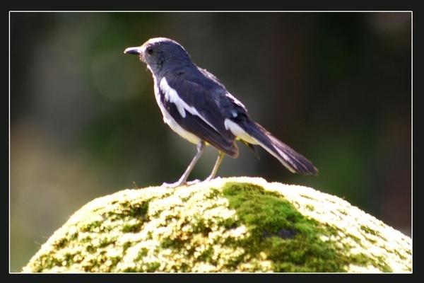 Bird by myphotoz