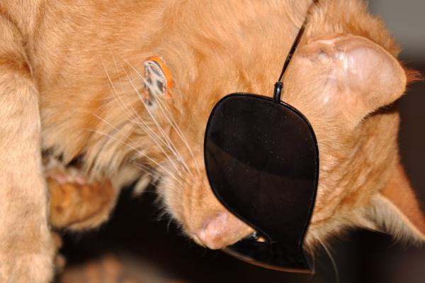 Cool Cat by SpiroSpiteri