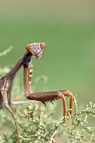 Alien! by SpiroSpiteri
