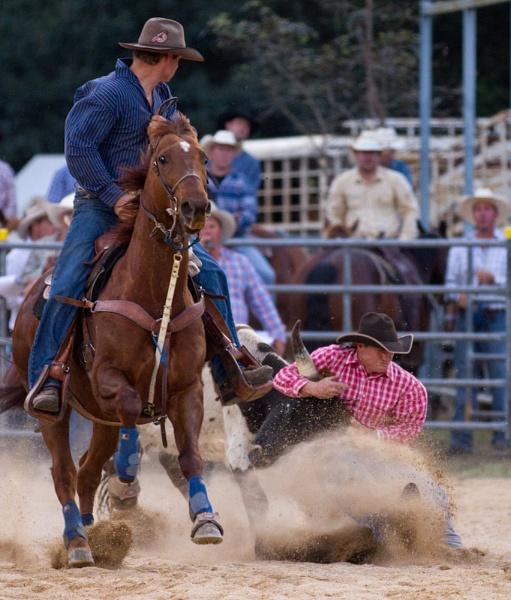 Steer Wrestling III by steve_evans