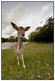 Who's being rude deer