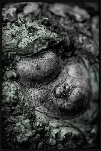 Amphibian Buddha by Morpyre