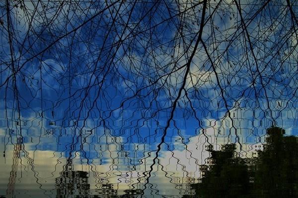 Branches by rajasekaranamie