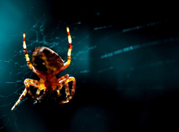 spider by curt