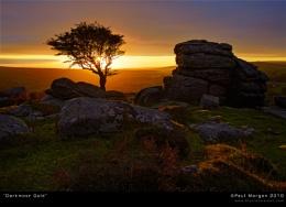 Dartmoor Gold