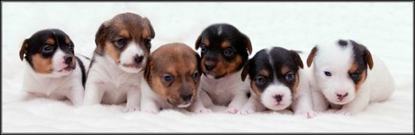 Pebble\'s Pups by RosePhoto