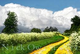 follow thew yellow brick road