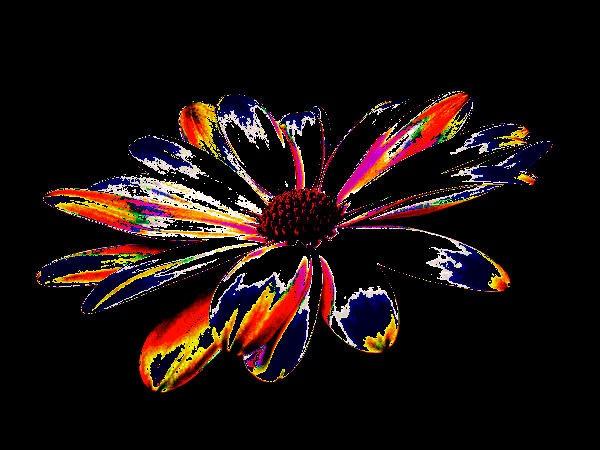 "\""Osteospermum\"" by RonnieAG"