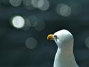 Jonathan Livingstone Seagull 1