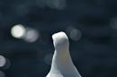 Jonathan Livingstone Seagull 2