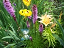 Summer flowers I my garden