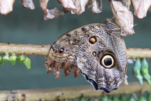 Butterfly newly emerged. by cazzycool