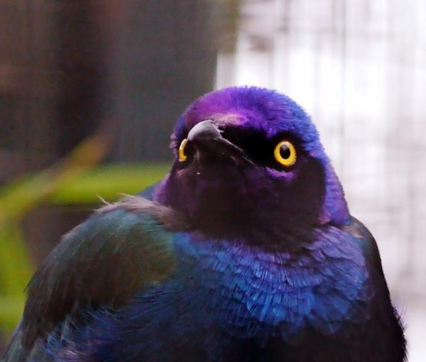 iridecence by sparrowhawk