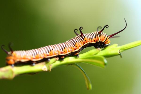 Caterpillar by AneesKarakkad
