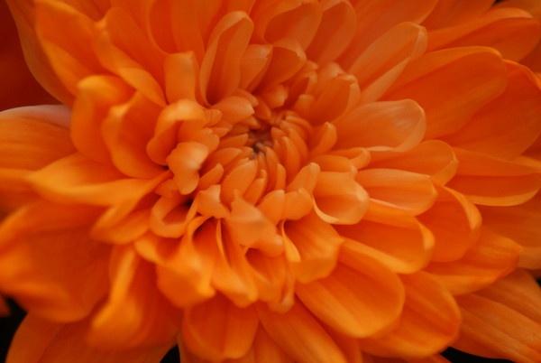 Orange by Gazsu