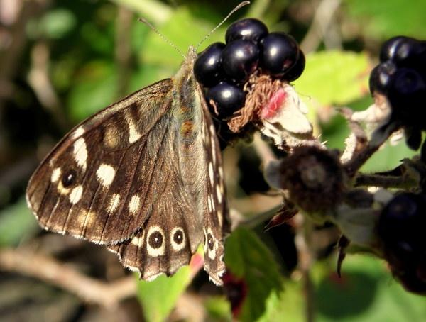 butterfly by hughsey