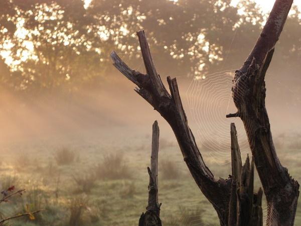 misty dawn by hughsey