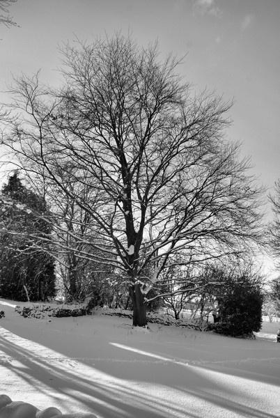 Winter Beech by taf1